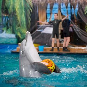 Дельфинарии, океанариумы Сочи