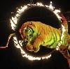 Цирки в Сочи