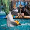 Дельфинарии, океанариумы в Сочи